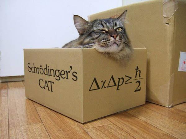 Schrodingers-Cat.jpg.752eedadd8c6f4d0b7c