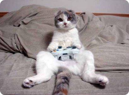 fotos-graciosas-de-gatos-12.jpg.dc0452ee