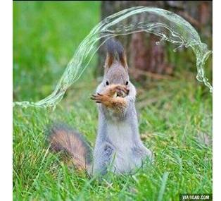 squirrel watermage.jpg