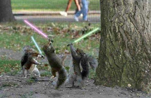 jedi_squirrel.jpg